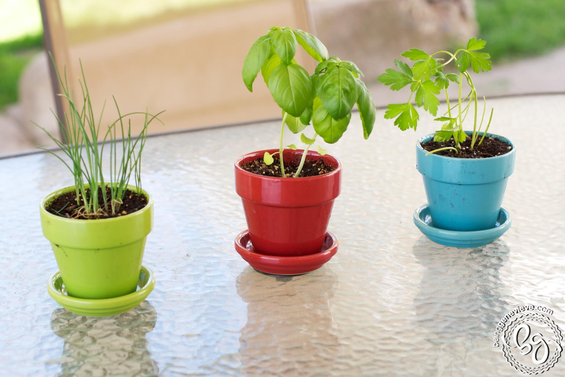 Charming Small Herb Pots Part - 12: The Herb Centerpiece The Herb Centerpiece