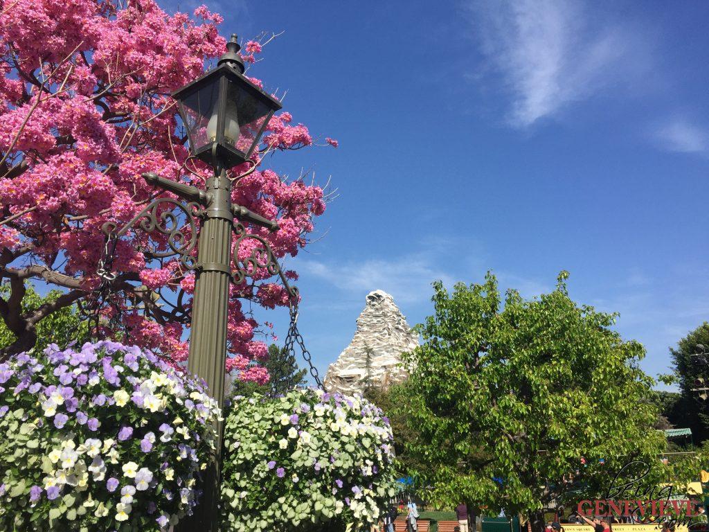 Disneyland - Family Style